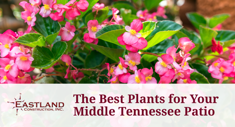 The Best Plants For Your Middle Tennessee Patio